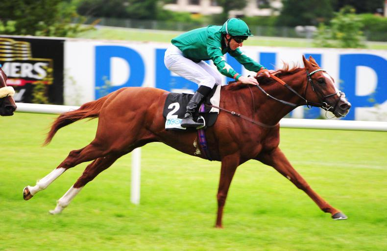Stallion career in line for Decorated Knight