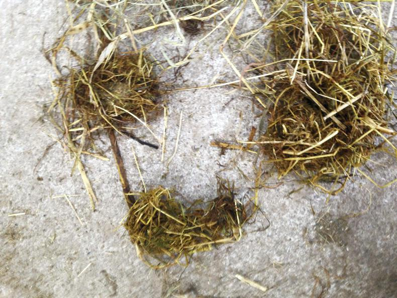 HORSE SENSE: Are you quidding?