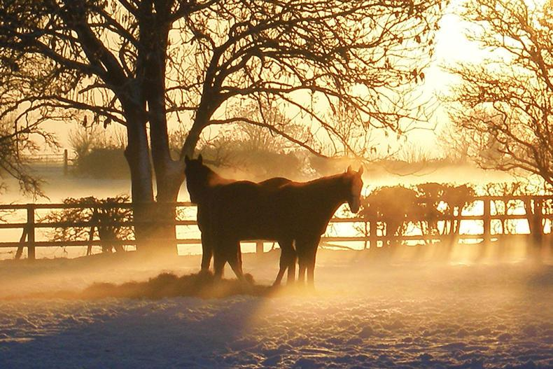 HORSE SENSE: Maintaining condition throughout winter