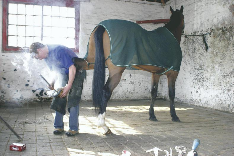 HORSE SENSE: Hunter hoofcare