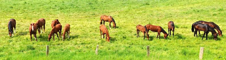 HORSE SENSE: Equine Body Language - Part 1