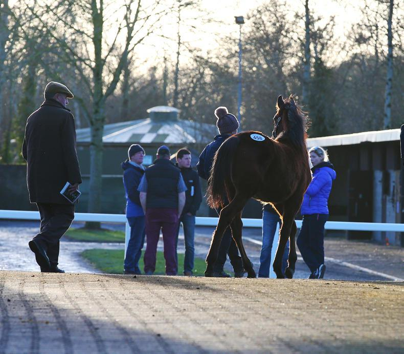 €86,000 Dandy Man colt stars on day two of Goffs February Sale