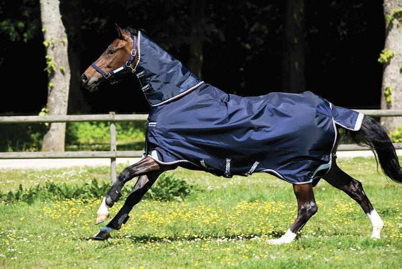 HORSE SENSE: Weekly tips