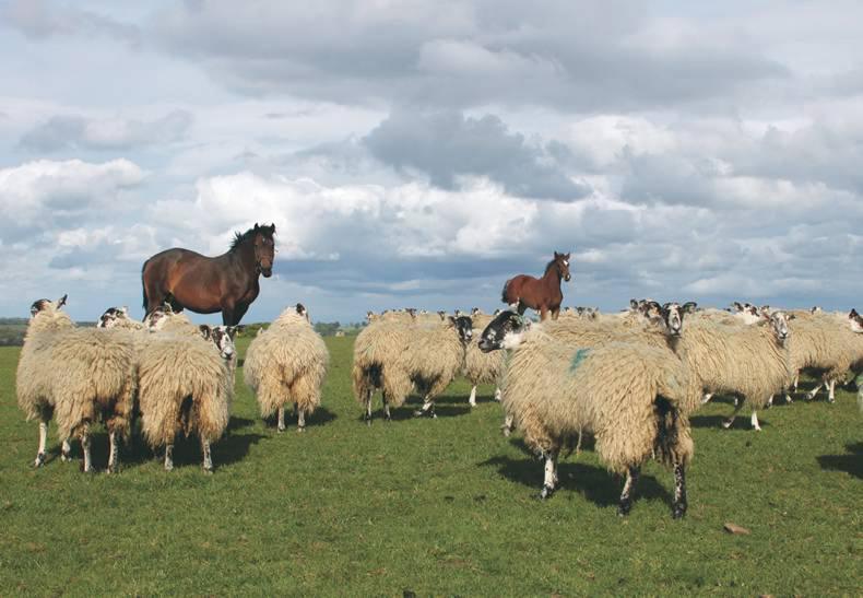 HORSE SENSE: A targeted worming regime