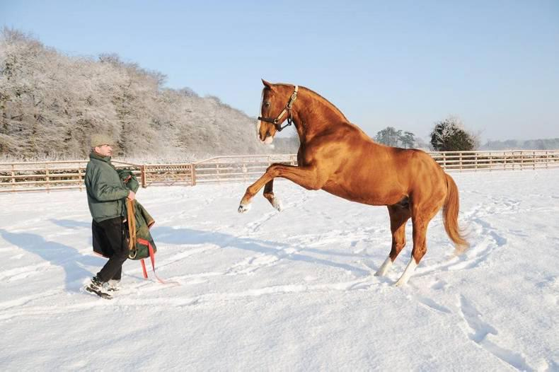 HORSE SENSE: Working in a winter wonderland