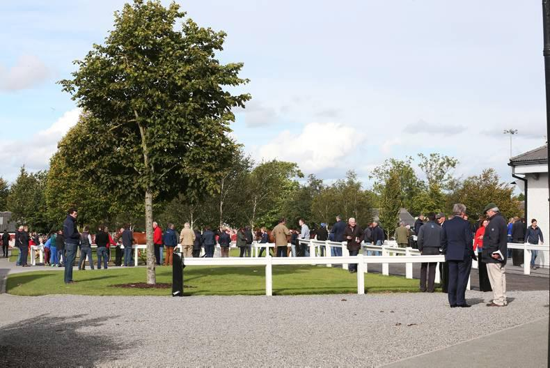 Tattersalls to sell unvaccinated mares in absentia