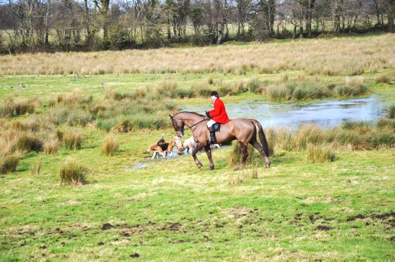 HORSE SENSE: Finding the hunter with the X-Factor