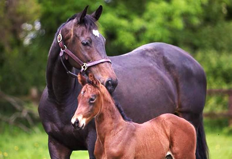 HORSE SENSE: The principles of conformation in foals