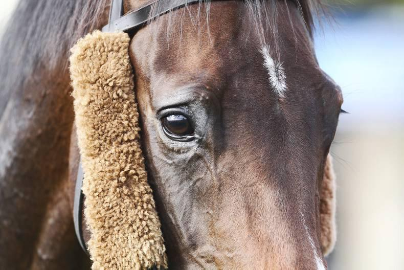 Horse Sense:  Feeding practices to promote calmness in horses