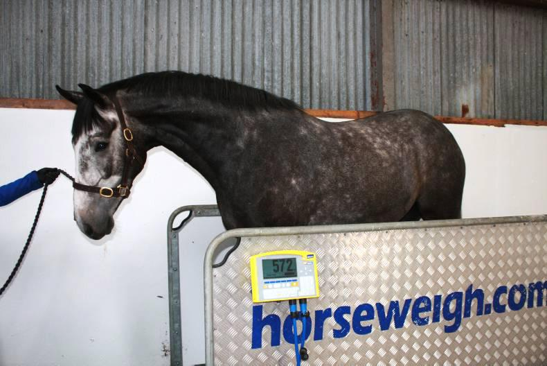 HORSE SENSE: How much does my horse weigh?