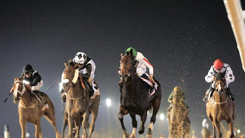 UAE: Breeding and racing success for Saudi Arabia