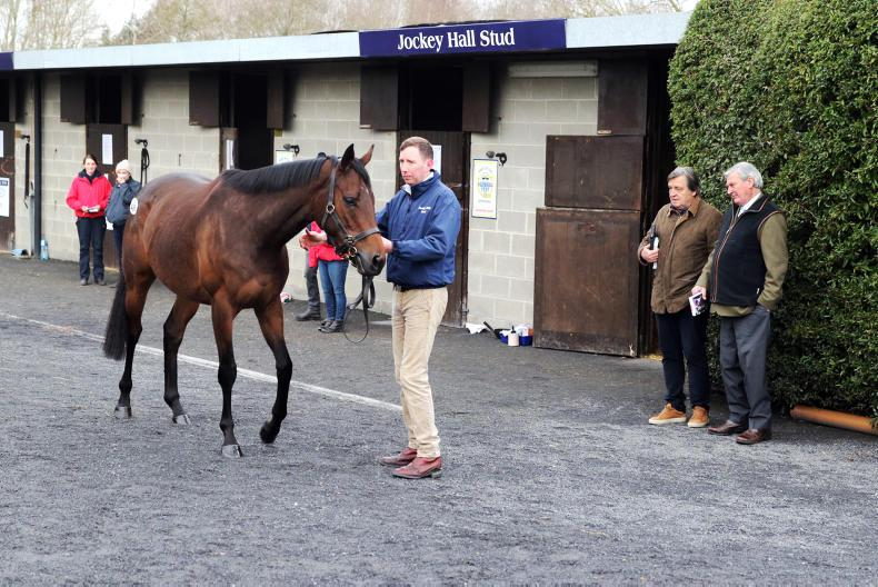 Military Angel tops Goffs February Sale at €210,000