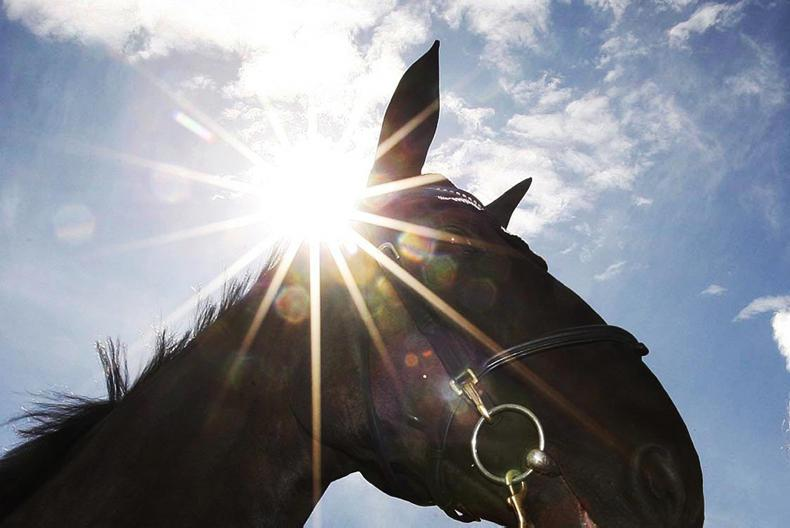 HORSE SENSE FOALING:  All the benefits of natural daylight for the stabled horse