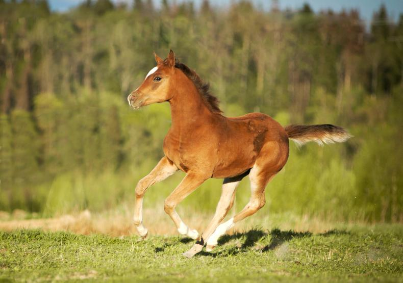HORSE SENSE FOALING: Maintaining sound development of your foal