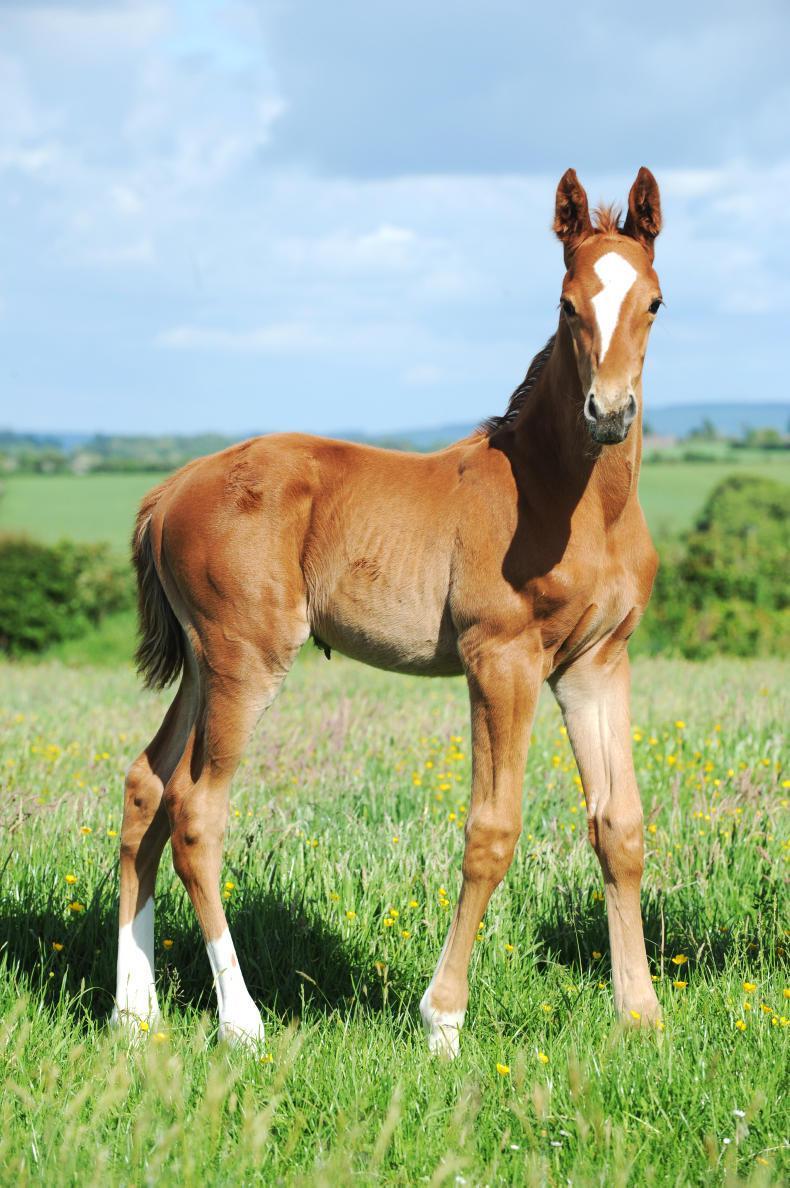 HORSE SENSE FOALING: Sample foaling system