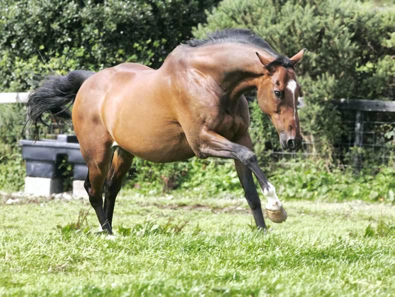 HORSE SENSE: A life after racing