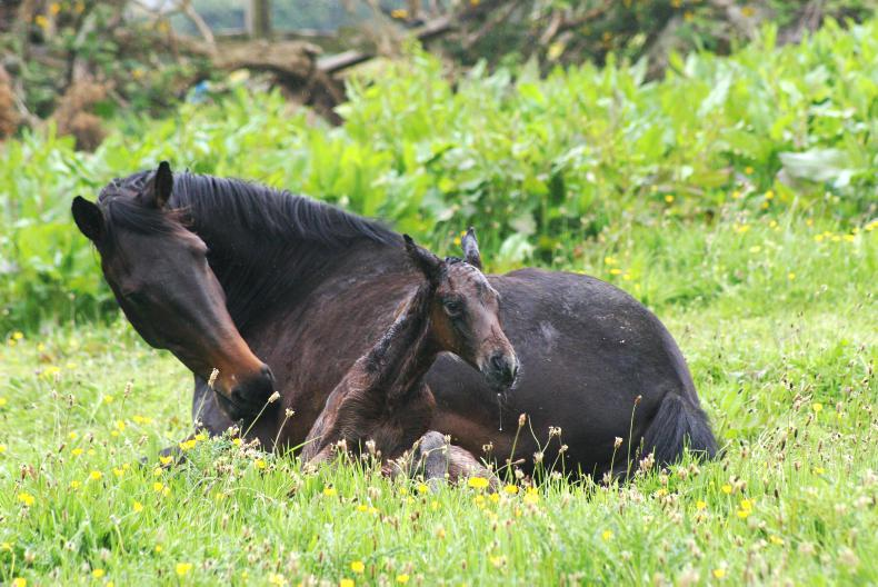 HORSE SENSE FOALING: Breeding during foal heat versus later cycles