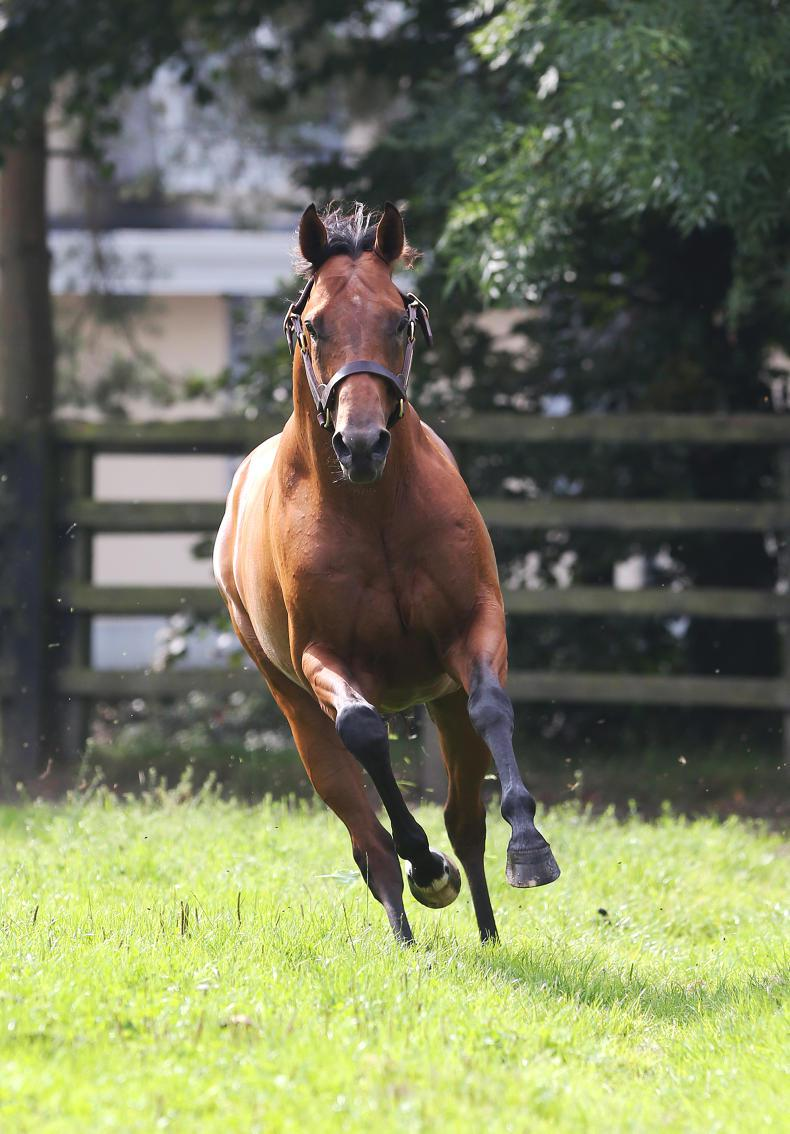 Gale Force Ten - Standing at Irish National Stud