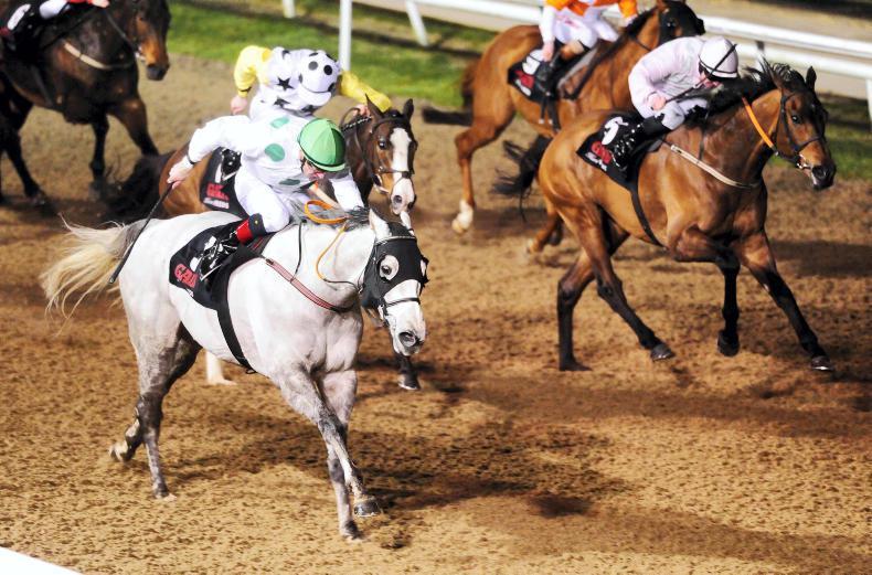 Image result for Togoville  horse