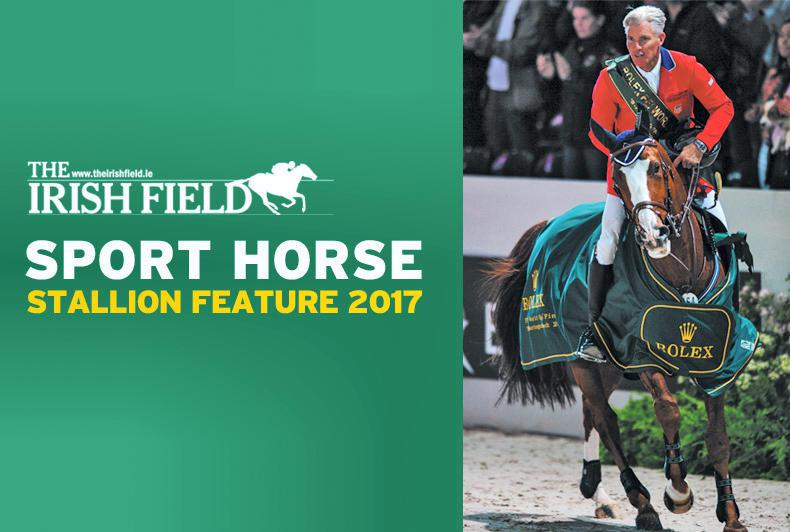 Sport Horse Stallion Feature 2017