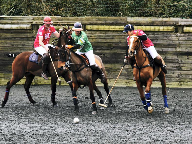 POLO:  Ireland beats Ecuador at Polo Wicklow