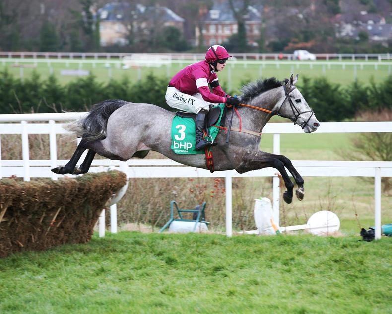 No Limini as Petit Mouchoir leads Irish assault on Champion Hurdle