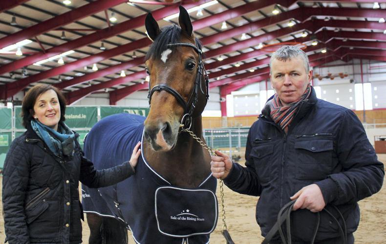 STALLION INSPECTIONS:  Stallions put through their paces
