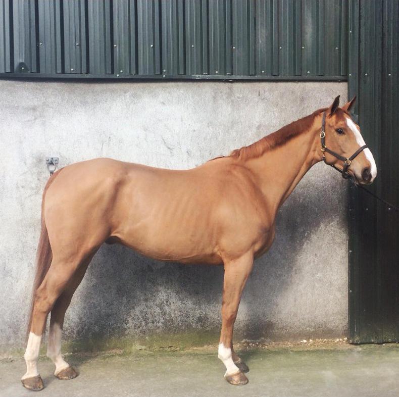 HORSE SENSE: Ten sport horse sales tips
