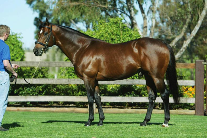 Outstanding sire Danehill Dancer dies at Coolmore Stud
