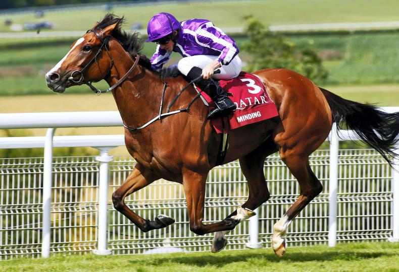 Minding heads list of 38 entries for Tattersalls Gold Cup