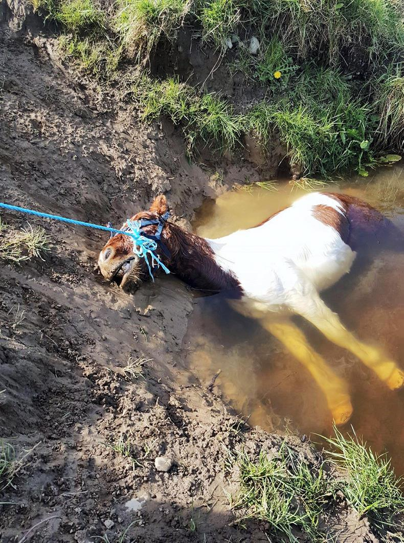 NEWS: Horse drowns in river despite rescue bid