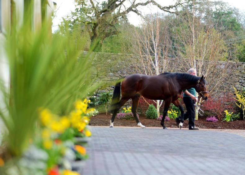 Ballylinch Stud to sponsor Leopardstown 1000 Guineas Trial
