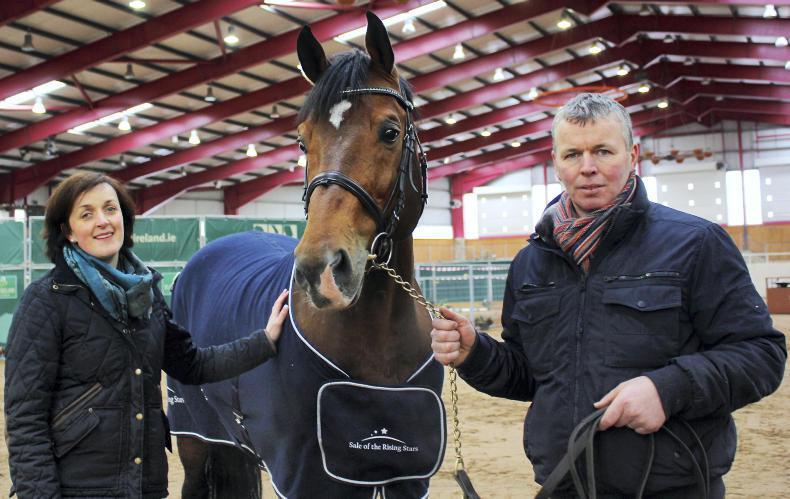STALLIONS 2017: Best mate - choosing stallions