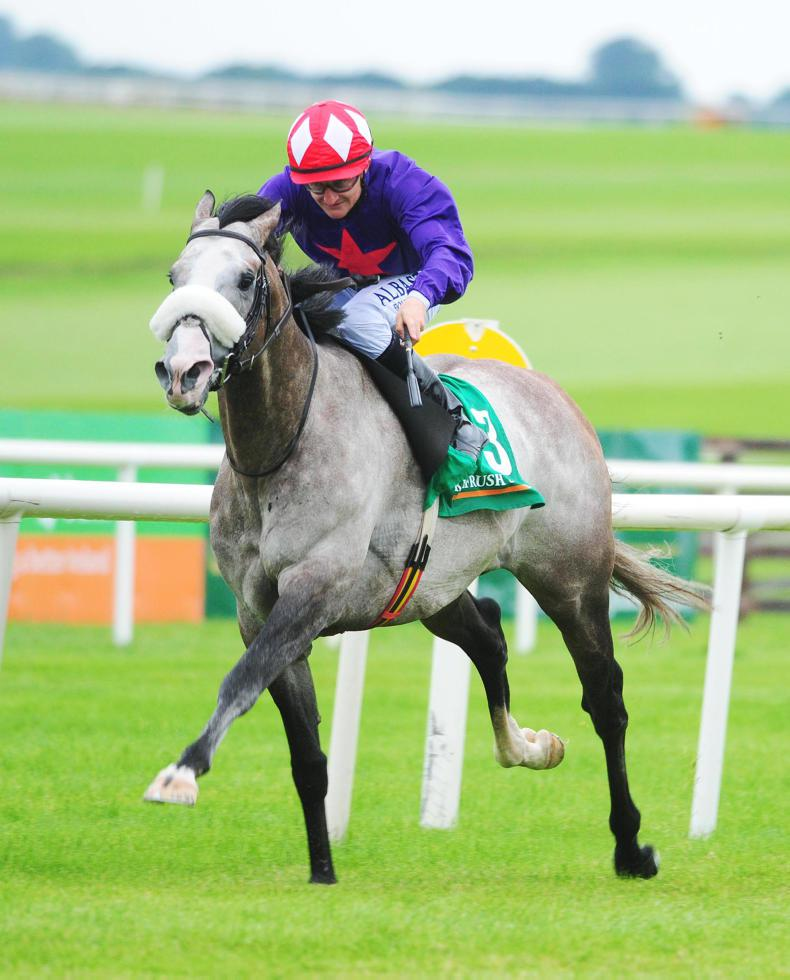 NAAS SUNDAY: Success Days chasing more glory