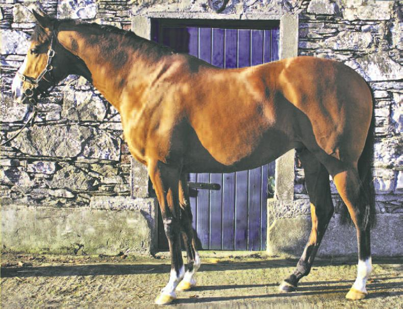 Life Force - Standing at Moortown Stud