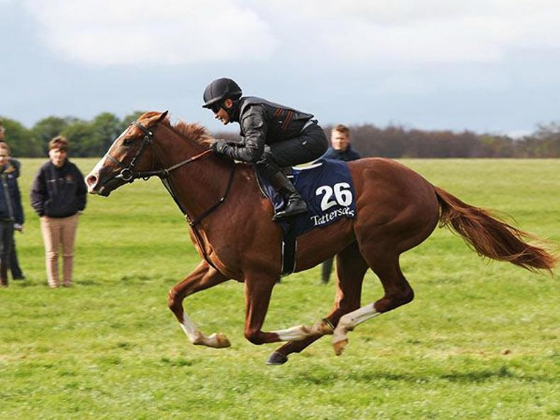 VIDEO: Intello colt tops Tattersalls Craven Breeze-Up trade at 575,000gns