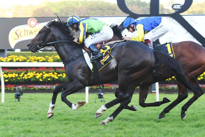 PEDIGREE NOTES: Group 1 stars and other notable breeding results