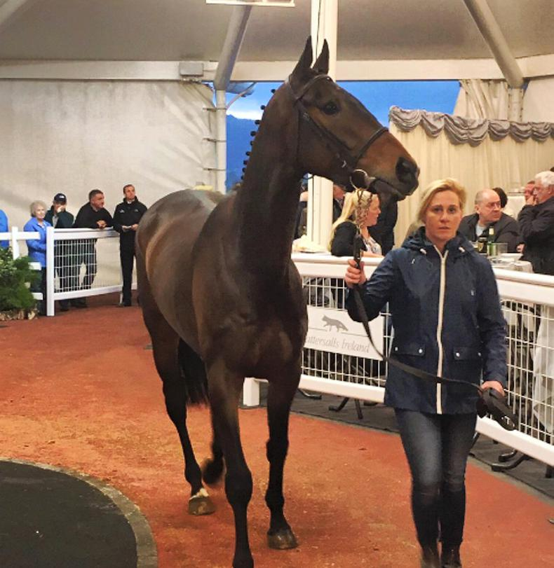 Five Irish pointers fetch £200,000+ at Cheltenham Sale