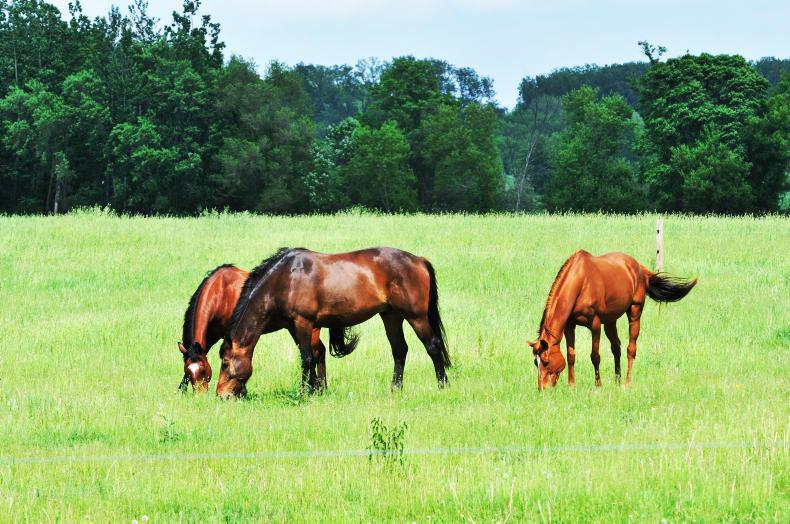 HORSE SENSE GRASSLAND ADVERTORIAL: Envy -for weed free horse paddocks