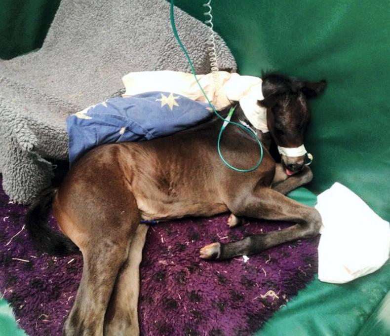 HANDS ON:  Dummy Foal syndrome