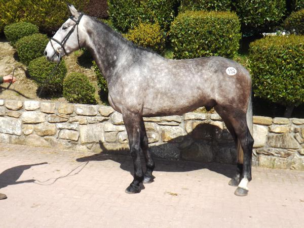 Top price of €7,000 at Cavan