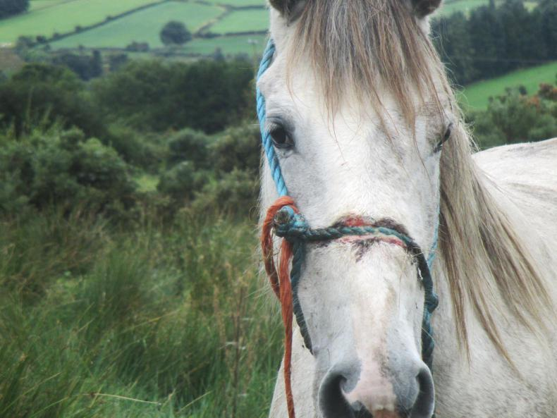 Man pleads guilty to causing unnecessary suffering to a mare