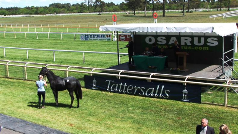 OSARUS BREEZE UP SALE: Disappointing start to sale year