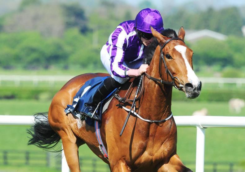 Minding still has Lockinge option after Naas stroll