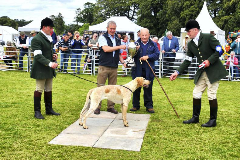 AROUND THE COUNTRY:  New kennels competition at Stradbally