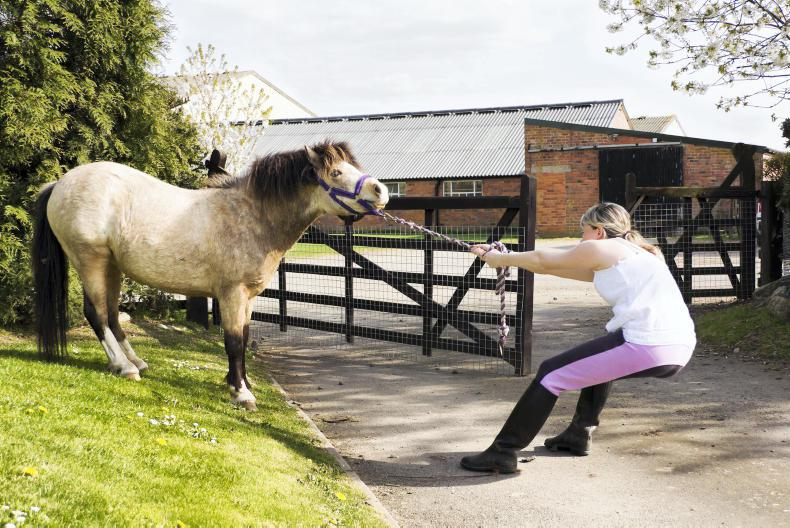 HORSE SENSE: Loading a reluctant horse