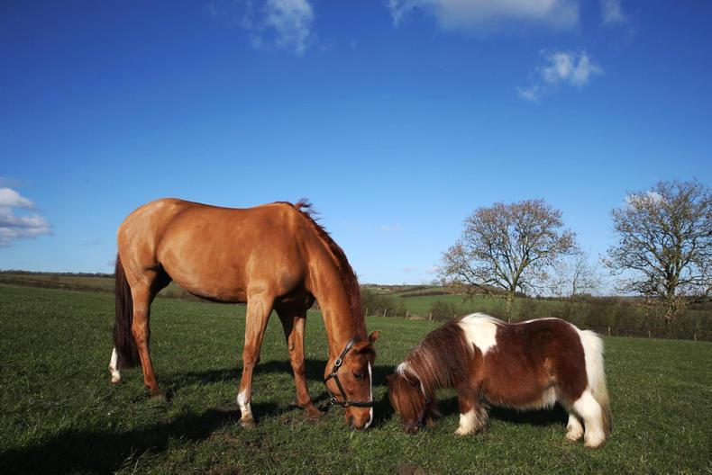 HANDS ON:  Equine First Aid tips