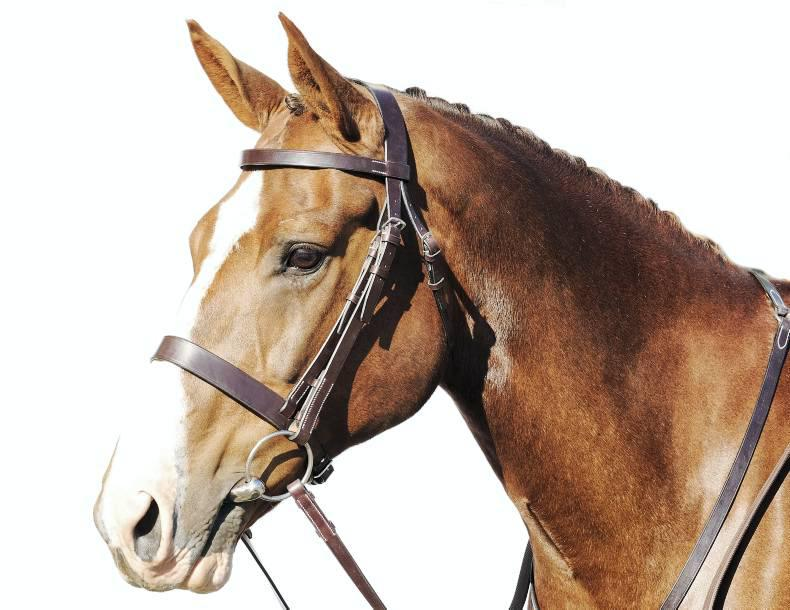 SPRING CLEANING: Are your saddles and tack in tip-top shape?