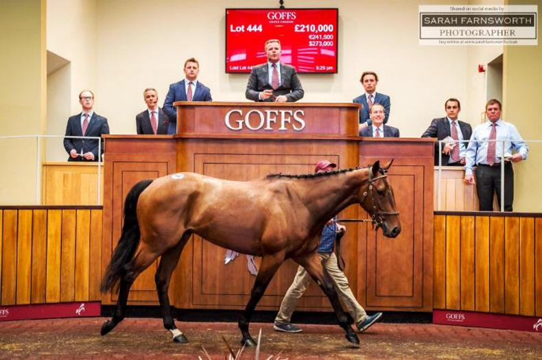 Point-to-pointer Invincible Cave makes £210,000 at Goffs UK