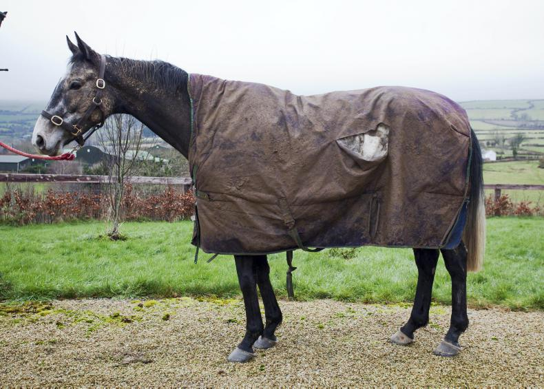 HORSE SENSE: Time to wash and repair your horse's rugs